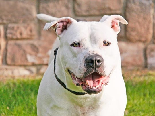 Blanco at the Franklin Township Animal Shelter.