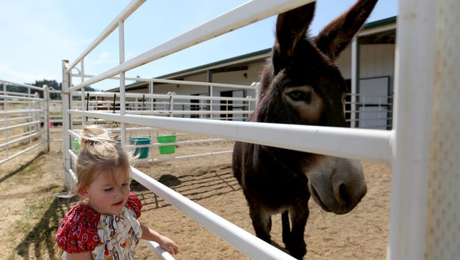 Katelynn Babcock, 3, of Albany, visits Ezyl, a therapy donkey, at the Horses of Hope Oregon open house in Turner on Wednesday, July 15, 2015.
