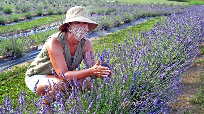 Amy Duxbury shows the proper technique to getting the scent of Lavender on your hands.