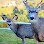 """Father and son stop by to say """"Hi."""""""