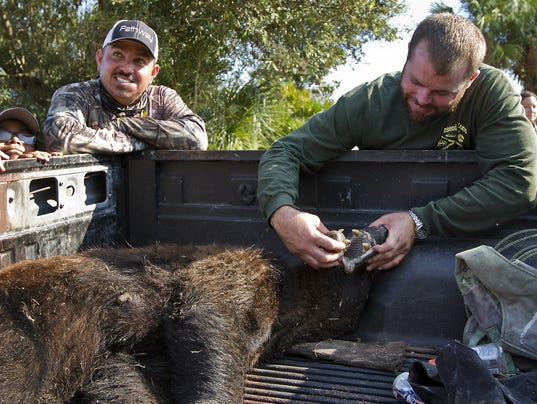 Florida black bear hunt