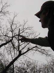 Burlington-based forester Don Tobin points out an Eastern