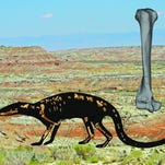 An artist's rendition shows the shape of Galecyon, with its fossilized bones laid out anatomically. In the background, the Willwood formation in the southern Bighorn Basin of Wyoming, where the bones were found. At right is the humerus (arm) bone of Galecyon.