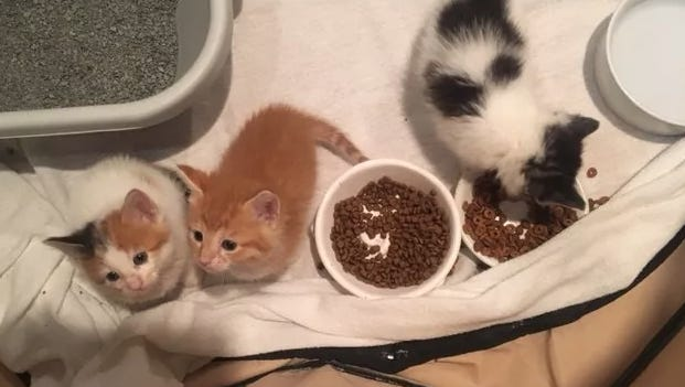 A local rescue group wants to know why someone stuffed two litters of kittens into garbage bags and dumped them at a park, leaving them to die.