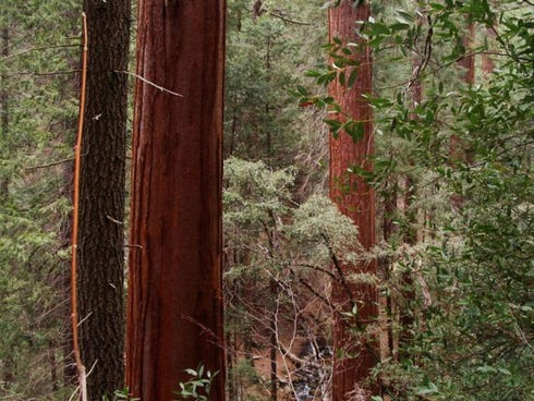 The world's tallest trees at the country's second-oldest national park must be seen.