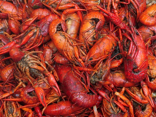 In this file photo, a batch of crawfish waits to be plated at the 16th annual Downtown Crawfish Jam in Hattiesburg. Now that Ash Wednesday has come and gone, the 2019 crawfish season is now up and running.