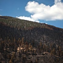 Vegetation begins to sprout Sunday off of Highway 38 in the San Bernardino National Forest near charred remnants of the Lake Fire.