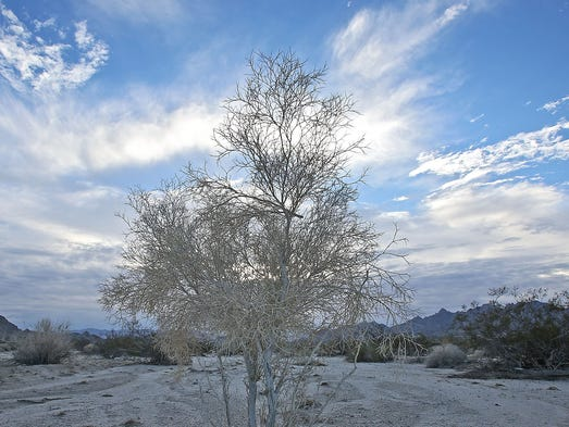 For Renewable Energy In The Desert A New Beginning