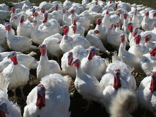 Spring Valley Turkey Farm.