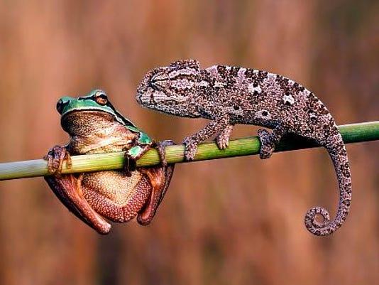 Wild Wednesday amphibians