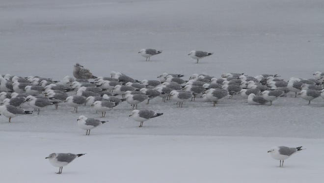 File photo: Seagulls huddle together against the wind on Irondequoit Bay in Irondequoit.