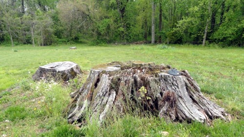 Seidel-Oak