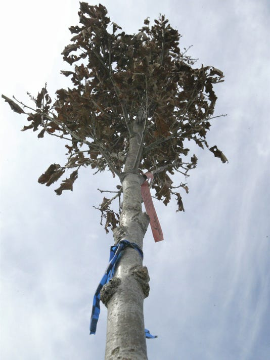 Sheboygan trees
