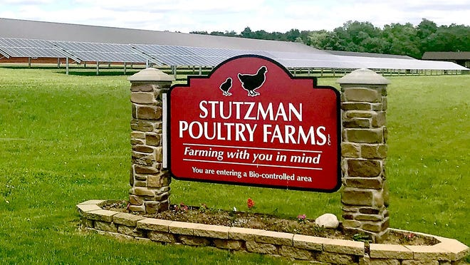 Stutzman Poultry Farm has switched entirely to solar power at its White Pigeon farm.