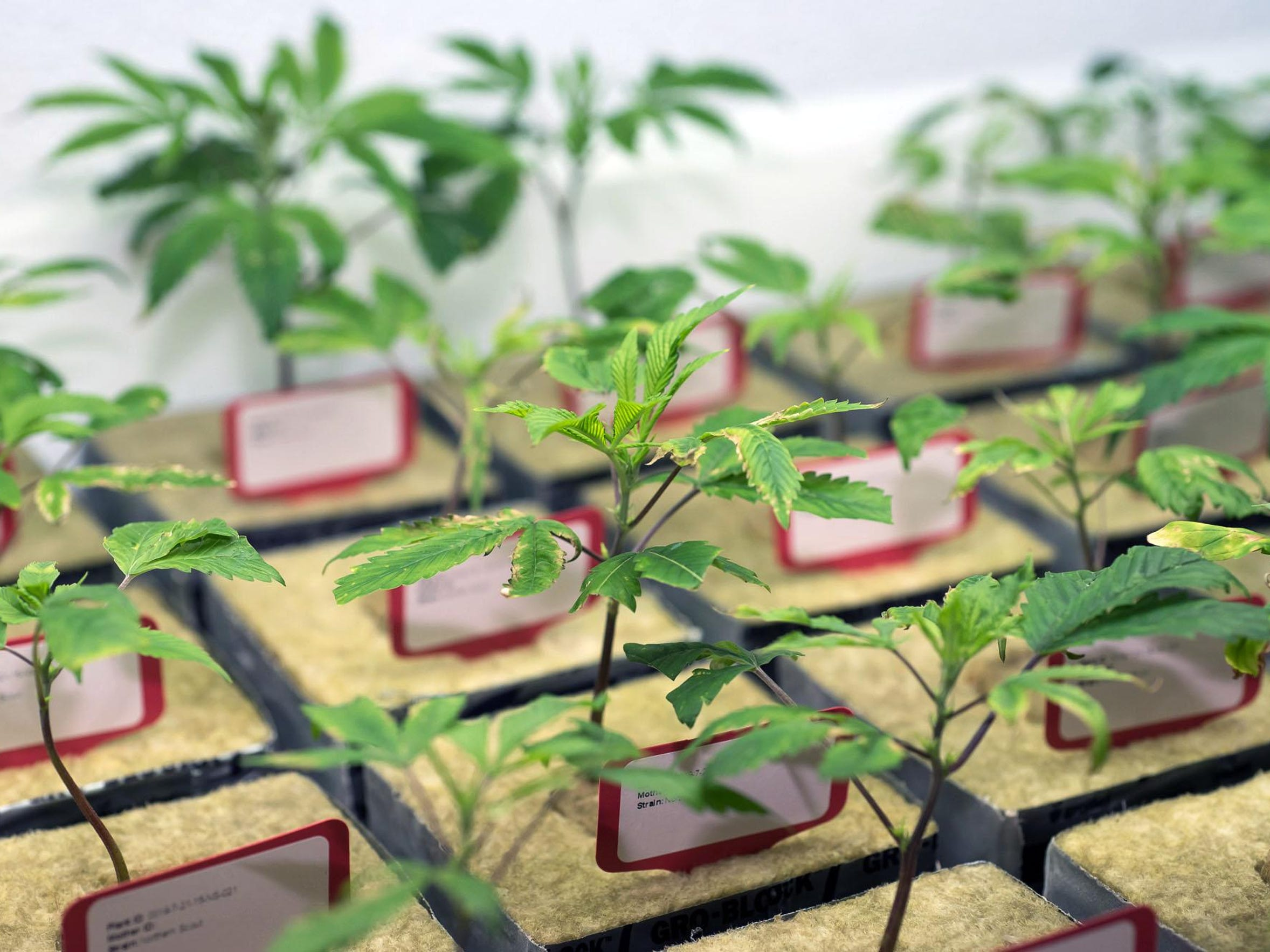 SierraWellness CultivationCenter-7