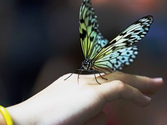 Darby Donaho says her collection of photographs opening at the Artifacts Gallery this weekend captures butterflies at all different stages of their existence.