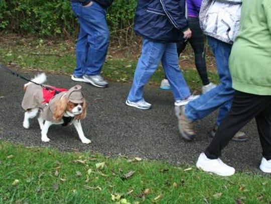 A pup walking in the 2015 Fun Run sports a detective
