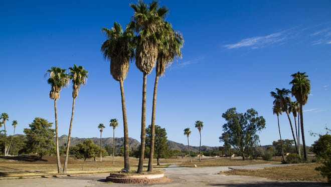 The palm trees at the old Ahwatukee Lakes Golf Course in July 2016.