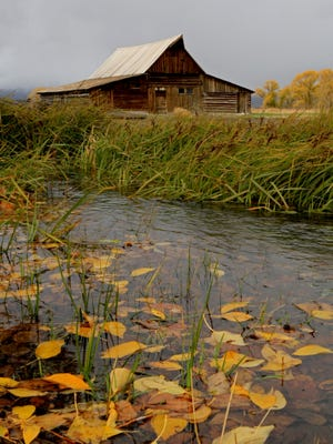 Autumn leaves decorate the landscape around T.A. Moulton Barn in Wyoming's Grand Teton National Park.