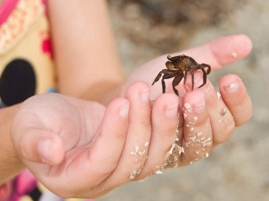The Steinhatchee Fiddler Crab Festival is Feb. 15-17. Steinhatchee is about 90 miles southeast of Tallahassee.