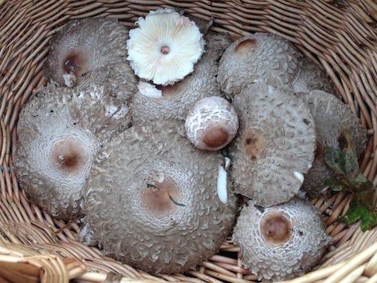 MushroomBasket