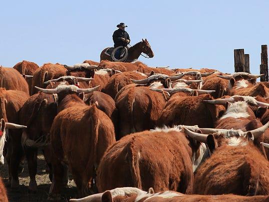 AP Livestock Profitability