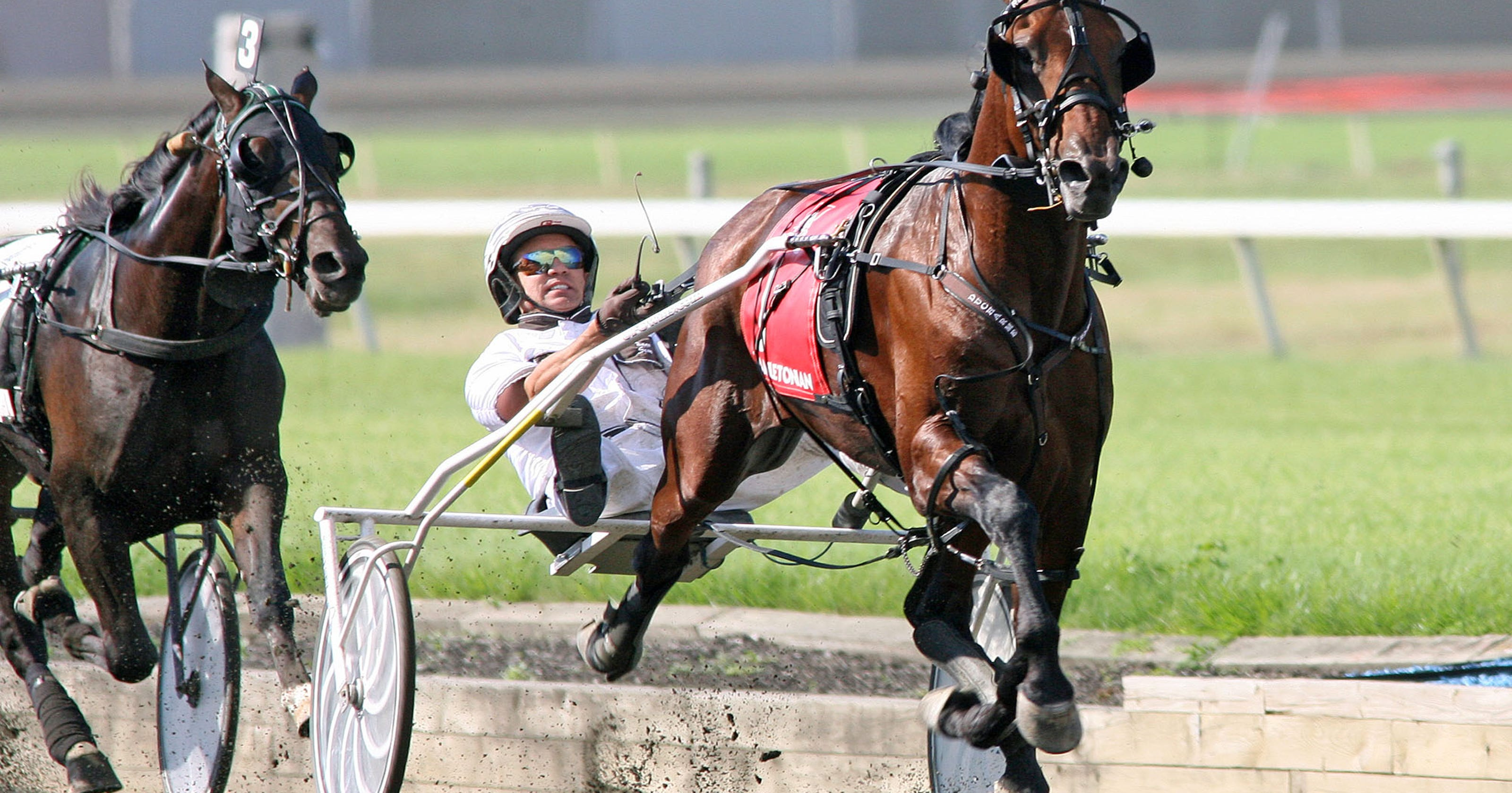 9 things I learned about harness racing