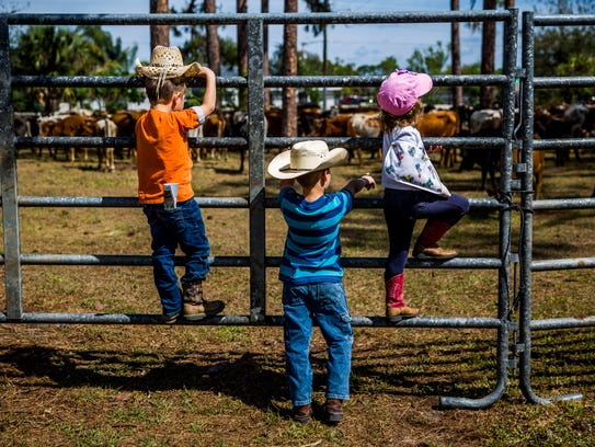 Children admire the cattle through the fence during