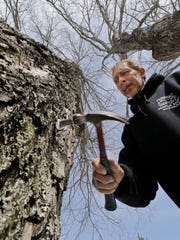 Parker's Maple Barn employee Jon Jonis taps a maple tree, Tuesday, Feb. 21, 2017, in Brookline, N.H. Sen. Maggie Hassan, D-NH, led a discussion with maple syrup producers in New Hampshire about how climate change is impacting their industry. (AP Photo/Elise Amendola)