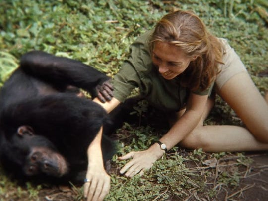 """""""Jane"""" uses previously unseen footage to explore the life of Jane Goodall."""