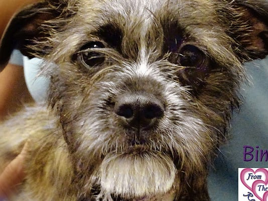 Bindi is available for adoption through From the Heart Animal Rescue.