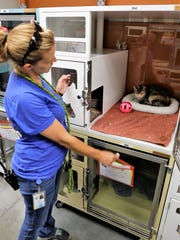"""Program manager Amber Francisco tries to get the attention of a kitten during the """"Priceless Pets"""" event Thursday at the Farmington Regional Animal Shelter."""