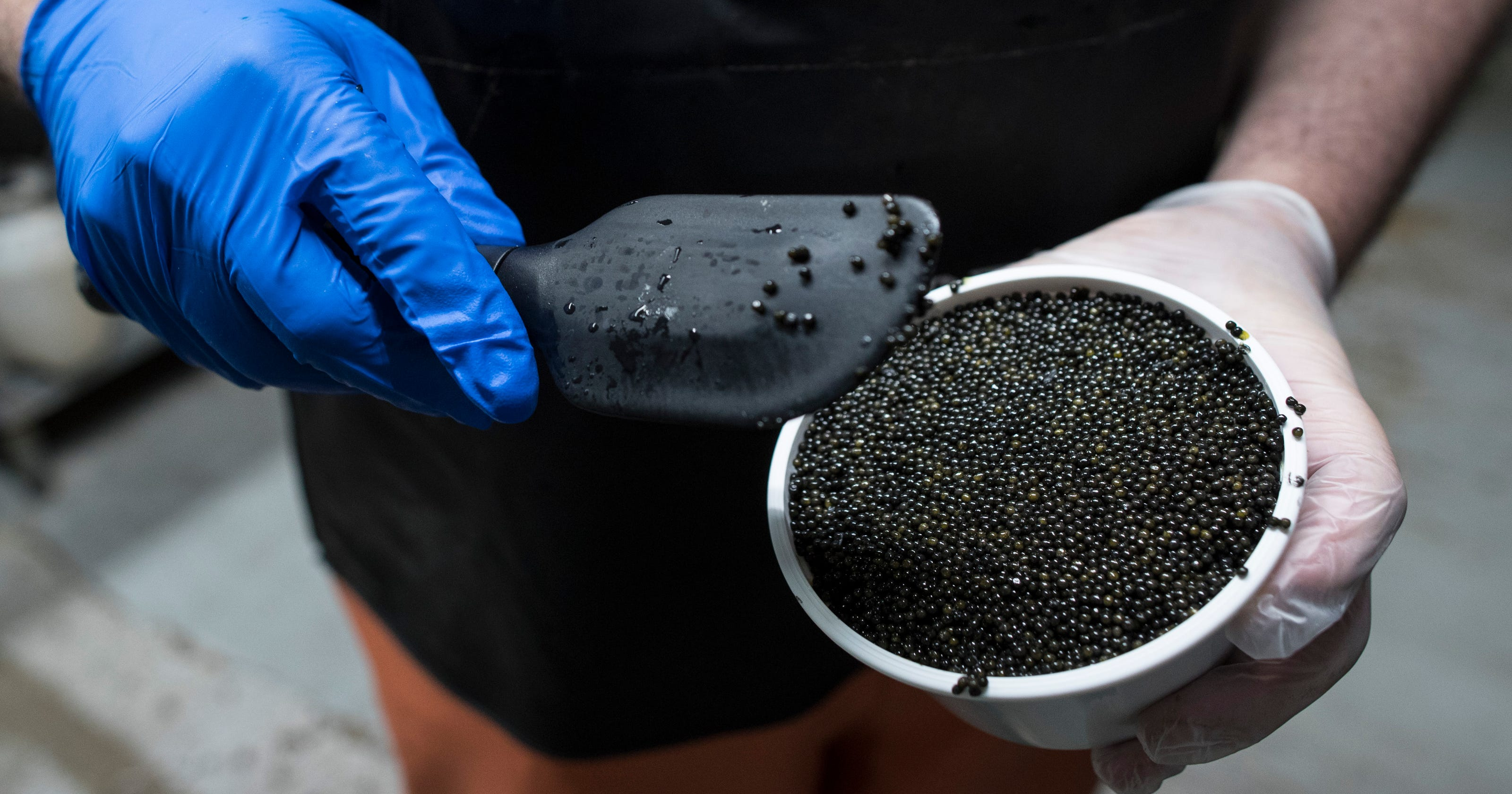 Kentucky caviar: State could become leader in market
