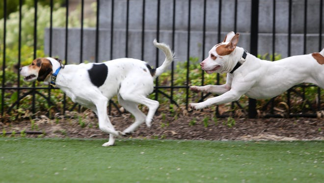 Tired of the rain? Take Fido out to a dog park this beautiful weekend.