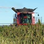 Wisconsin farmers: Industrial hemp an emerging opportunity