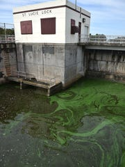 Algae and water condition seen downstream of the St.