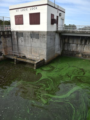 Algae and water condition seen downstream of the St. Lucie Lock and Dam along the C-44 canal on Monday, July 9, 2018, in Martin County. The Army Corps of Engineers suspended discharges of Lake Okeechobee algae-filled water again late Sunday, July 8, 2018.
