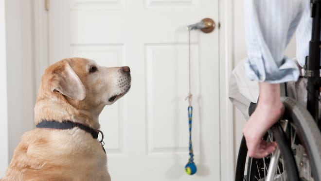 Service dogs are working animals that are individually trained to perform tasks for people with disabilities