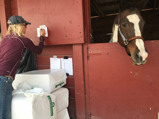 Georgia Hellum-Willits writes down the diet plan for a horse from Cloverleaf Ranch being sheltered at the Sonoma County Fairgrounds on Wednesday, Oct. 11.