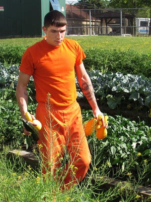 Inmate Jeffrey Duell, of Woodhull, tends the vegetable garden outside the Steuben County Jail in Bath.
