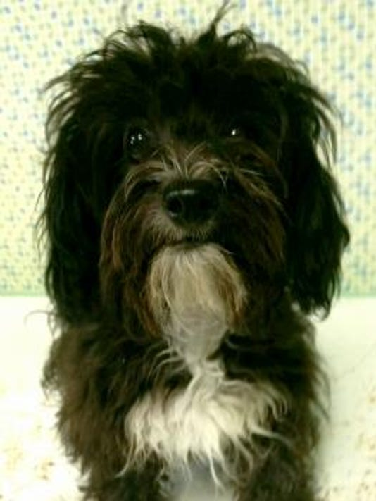 Pet of the day 1016