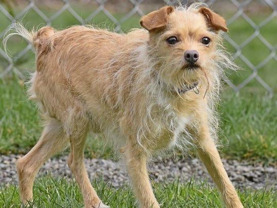 Renny is a 5-year-old terrier mix. Call Marion County