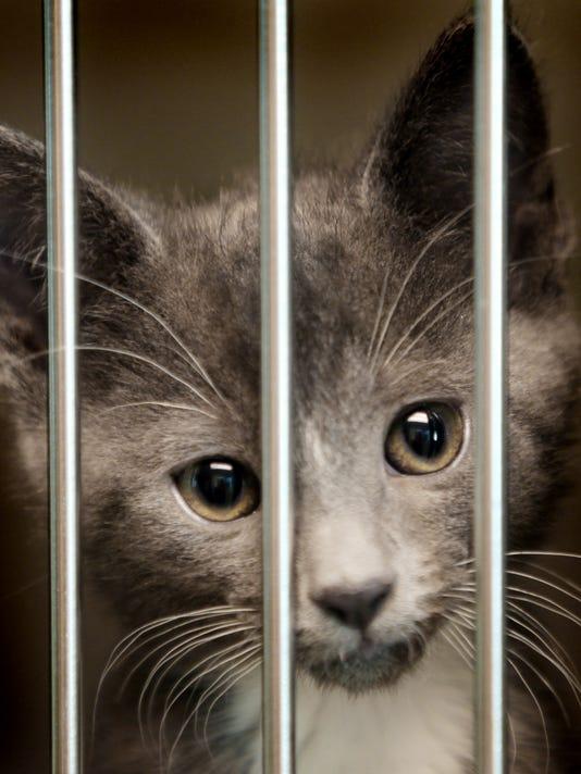 635967681809619487-kitten1.jpg