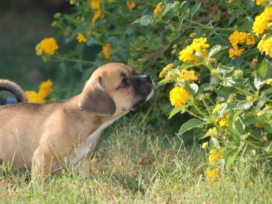 The Tennessee Lottery is looking for dogs with star quality ... like yours?