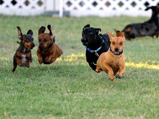 dachshund.jpg