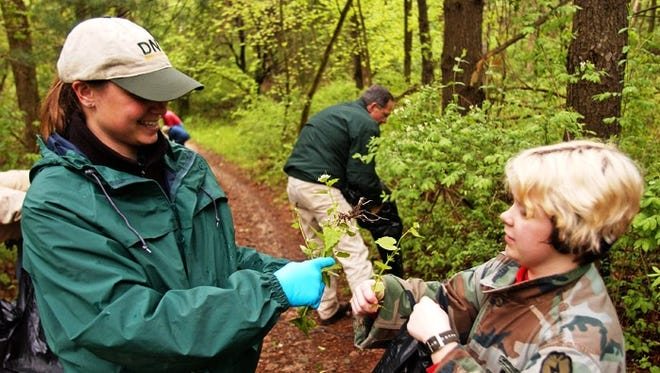 Volunteers pull garlic mustard, an invasive species, at a state park.