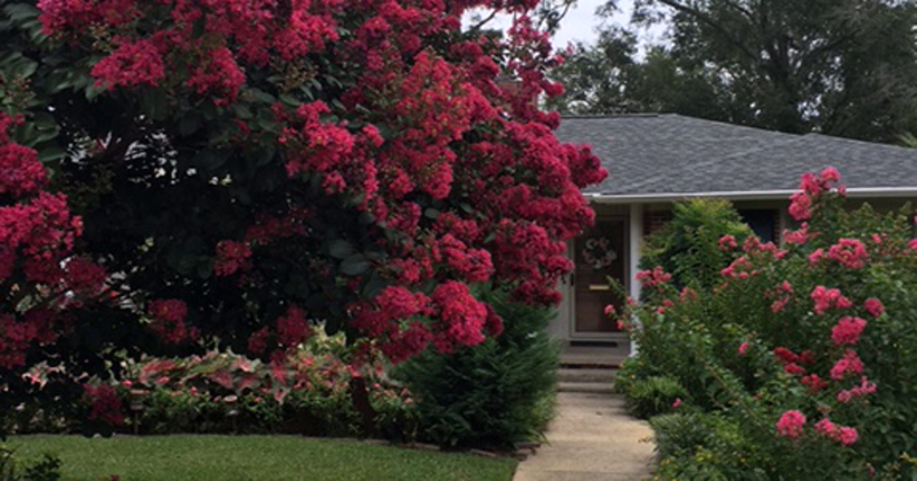 Save Energy With Shade Trees