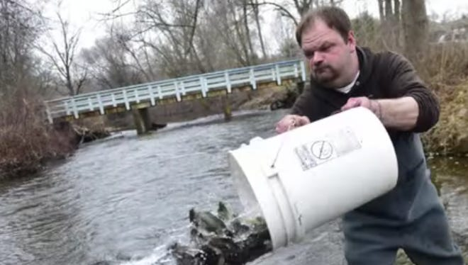 A man stocks trout in a local creek ahead of the opening day of trout season in 2015.