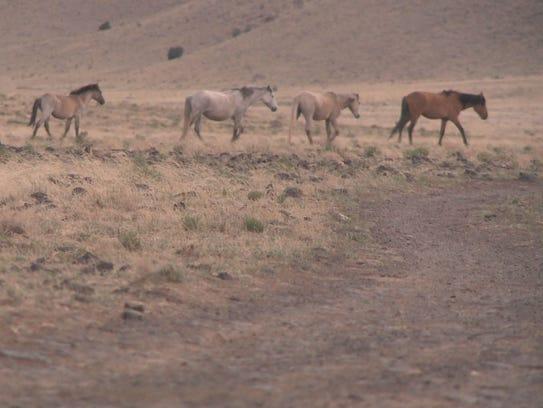 Wild horses 03