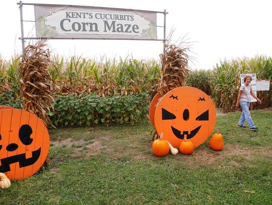 Nina Kent exits the corn maze at Kent's Cucurbits Wednesday,